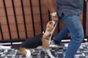 your dog can be trained not to be aggressive