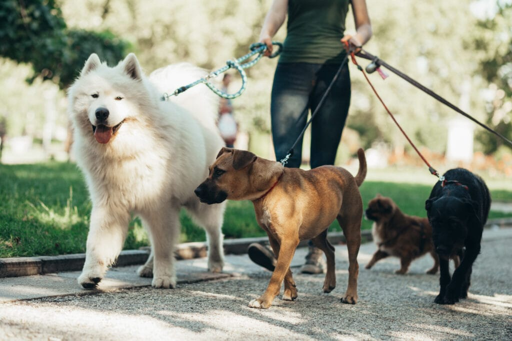 a dog walker can provide a fantastic break in the day for your pup