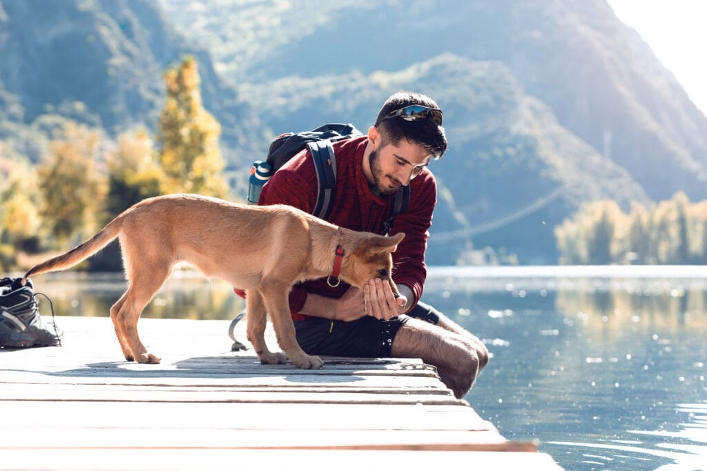 spending some time with your dog specifically at the weekends is critical!